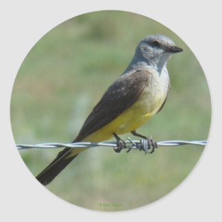 Kingbird occidental B0044 Pegatina Redonda