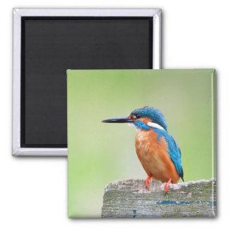 Kingfisher bird magnet