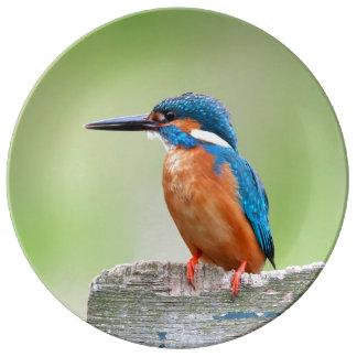 Kingfisher bird plate