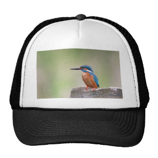 Kingfisher bird. trucker hat