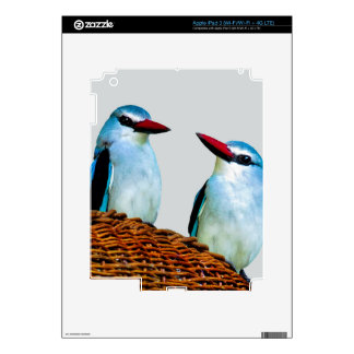Kingfisher Birds South Africa Skins For iPad 3