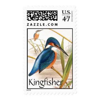 Kingfisher Birds Wildlife Animals Pond Postage