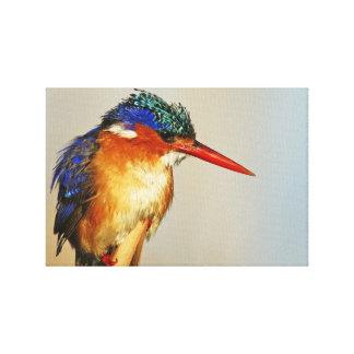 Kingfisher Canvas Prints