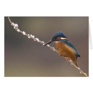 Kingfisher. Card by cARTerART