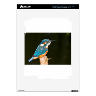 Kingfisher on a stick skins for iPad 3