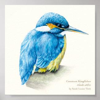 Kingfisher Ornithology fine art square print
