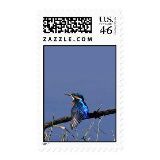 Kingfisher Postage stamp