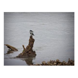 Kingfisher Post Card