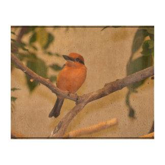 Kingfisher Cork Paper