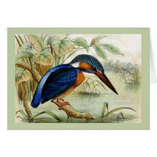 Kingfisher Vintage Bird Illustration Card