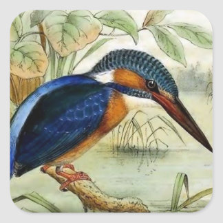 Kingfisher Vintage Bird Illustration Square Sticker