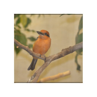Kingfisher Wood Canvases