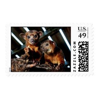 Kinkajous postage stamp