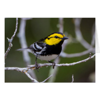 Kinney County, Texas. Golden-cheeked Warbler Card