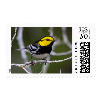 Kinney County, Texas. Golden-cheeked Warbler Postage