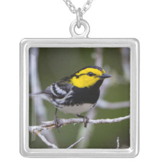 Kinney County, Texas. Golden-cheeked Warbler Square Pendant Necklace