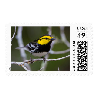 Kinney County, Texas. Golden-cheeked Warbler Stamp