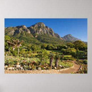 Kirstenbosch Botanic Gardens, Cape Town Poster
