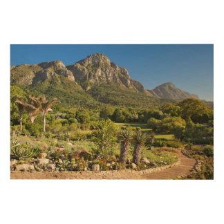 Kirstenbosch Botanic Gardens, Cape Town Wood Wall Art