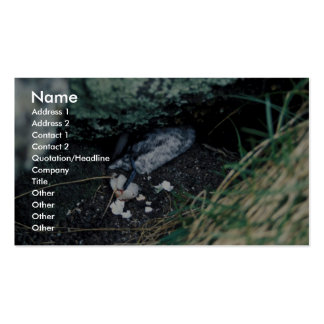 Kiska Island Sirius Point, Auklet killed by rat Double-Sided Standard Business Cards (Pack Of 100)