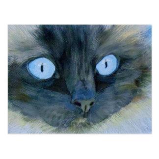 Kismet el gato de Ragdoll Tarjeta Postal