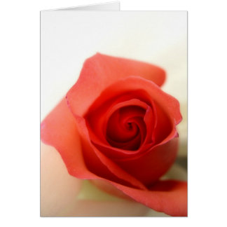 Kiss from a rose card