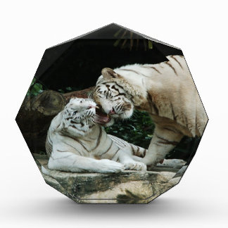 Kiss love and joy White Bengal Tigers Awards