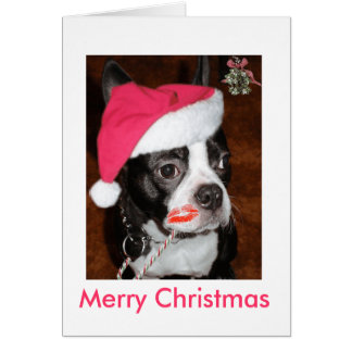 Kiss me Boston Terrier Greeting Cards