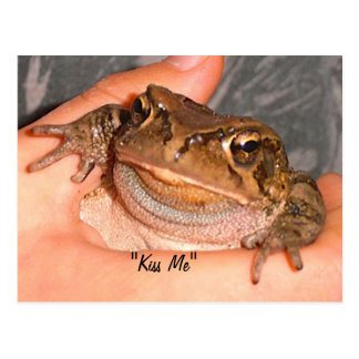 Kiss Me Frog Postcard