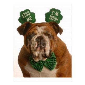 kiss me I'm Irish dog Postcard
