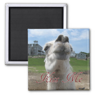 Kiss Me Llama Close-up Fridge Magnets