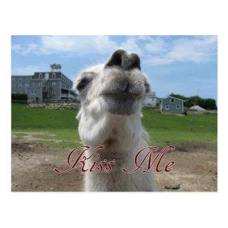 Kiss Me Llama Close-up Postcards