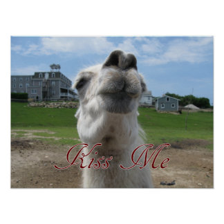Kiss Me Llama Close-up Poster