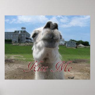 Kiss Me Llama Close-up Posters
