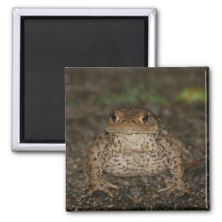 Kiss The Frog Magnet
