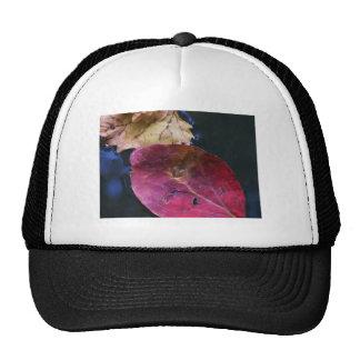 kissed & fell trucker hat