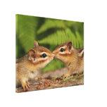 Kissing Baby Chipmunks Canvas Prints