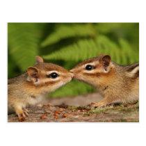 Kissing Baby Chipmunks Postcard