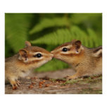 Kissing Baby Chipmunks Print