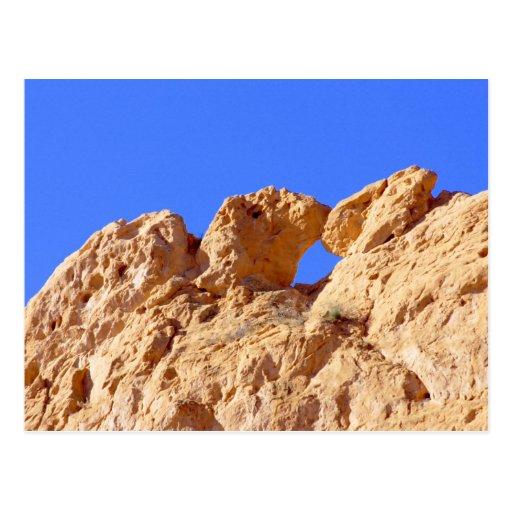 Kissing Camels Post Card