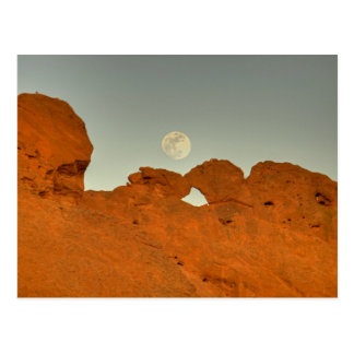 Kissing Camels Under Moon 01 Post Cards