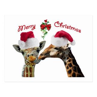 Kissing Christmas Giraffes Under Mistletoe Postcard
