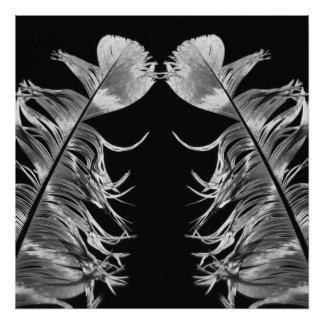 Kissing Feathers Black & White Photographic Art Poster