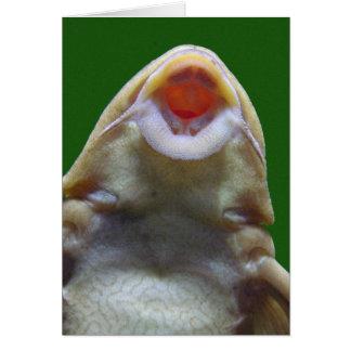 Kissing Fish Card