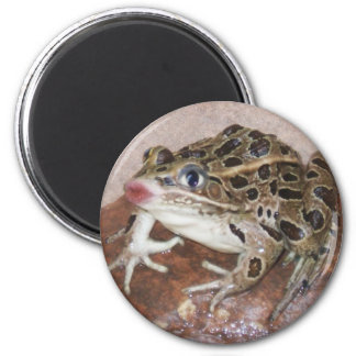 kissing frog 2 inch round magnet