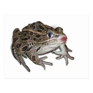 Kissing Frog Postcard