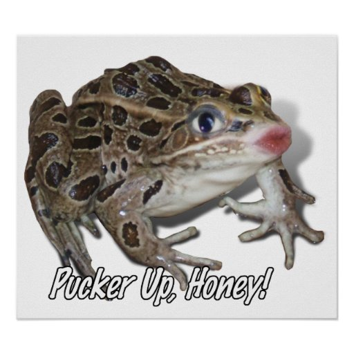 Kissing Frog - Pucker Up, Honey! Poster