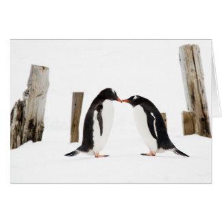 Kissing Gentoo Penguins Card