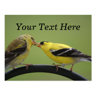 Kissing Goldfinches Postcard
