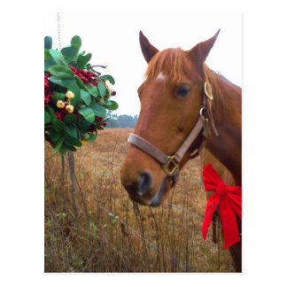 Kissing Horse under Mistletoe Postcard